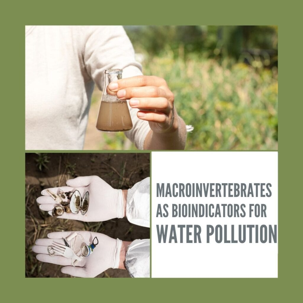 Macroinvertebrates as bioindicators for water pollution